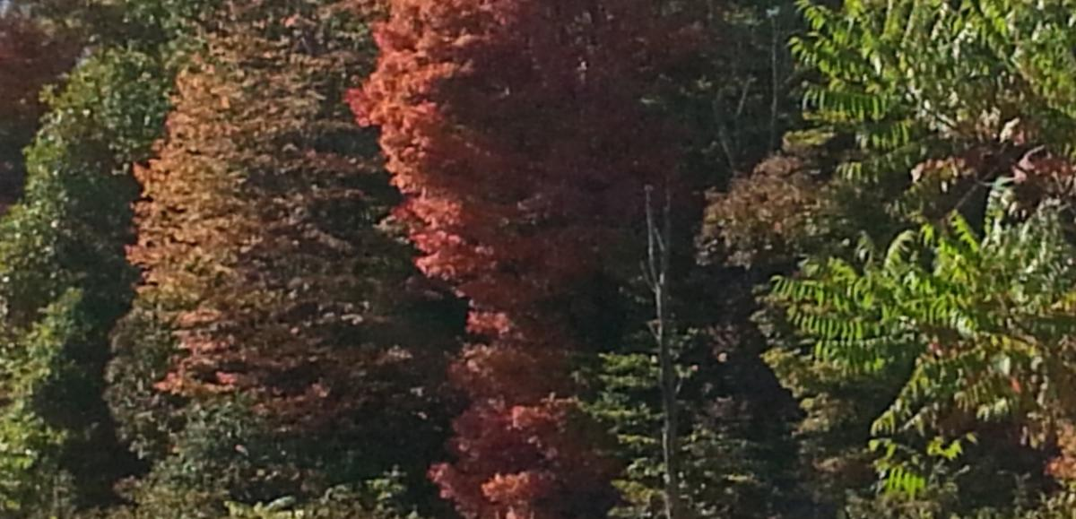 photo of trees in fall, beginning to change